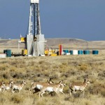 Plight of the Pronghorn